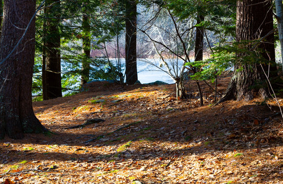 Leaf covered path leading to a pond in Maine