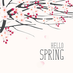 Vector greeting card with a spring landscape with pink buds and flowers on the branches of a blooming tree and inscription Hello Spring