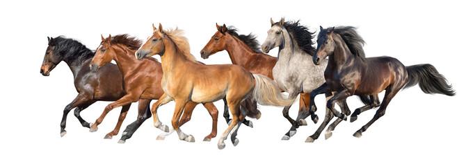 Horse herd run fast in white background