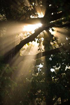 soleil bois arbres rayons