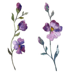 Blue purple flax floral botanical flower. Watercolor background illustration set. Isolated flax illustration element.