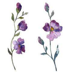 Blue purple flax floral botanical flower. Watercolor background illustration set. Isolated flax illustration element.