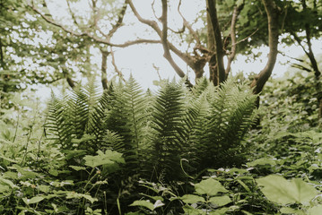 ferns in the forest