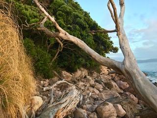 Coast, New Zealand