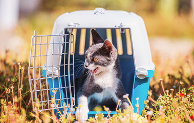 Cat inside pet carrier. Pets and animals concept