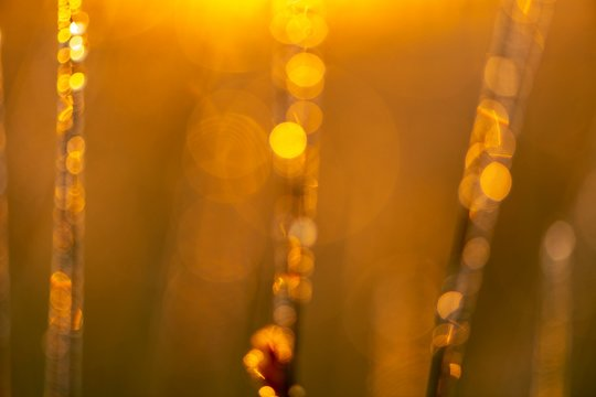 Grass blades with dew drops in the back light in the early morning at sunrise, Murnauer moss, Murnau, Upper Bavaria, Germany, Europe