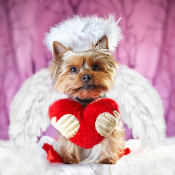 picture of a yorkshire terrier with a heart saying: be my valentine