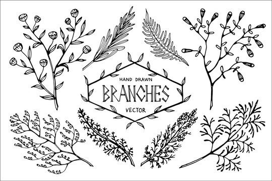 Hand drawn vector branches.