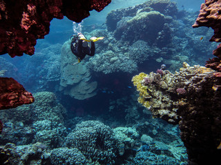 Male scuba diver swimming in red sea