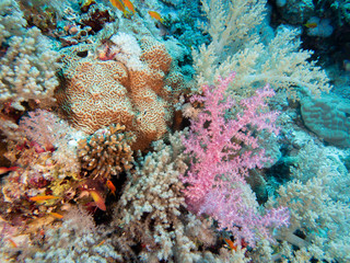 Fish swimming in colorful coral reef in red sea