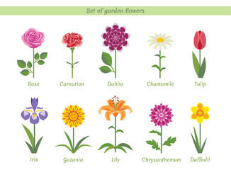 Set of named garden flowers. Collection of vector bright flat images. Rose, Carnation, Dahlia, Chamomile, Tulip, Iris, Gazania, Lily, Chrysanthemum, Daffodil.