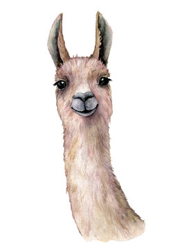 Watercolor card with llama. Hand painted beautiful illustration with animal isolated on white background. For design, print, fabric or background.