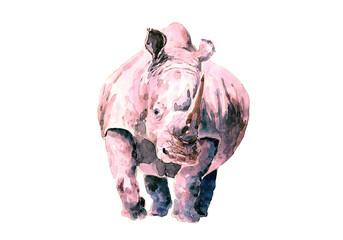 Rosy rhinoceros Drawing watercolor.