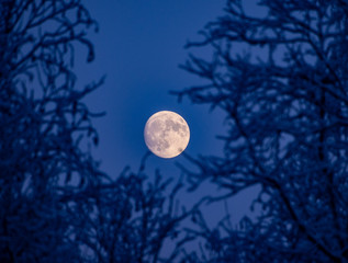 full moon and trees with snow