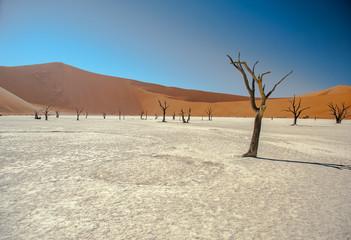Namibian Desert Trees