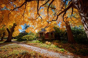a beautiful tree in autumn