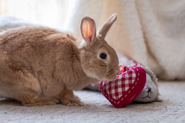 Rufus rabbit nudges heart in vintage setting, soft natural tones