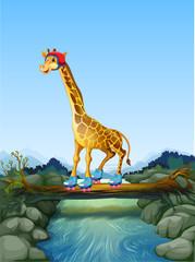 Giraffe playing roller skate in nature
