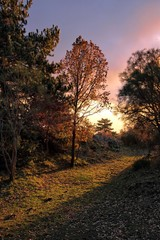 Fototapete - Rural Path In The Woods At The Sunset