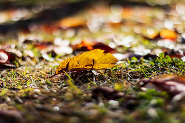 autumn leaves on a green background