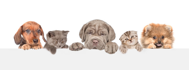 Group of cats and dogs over white banner. isolated on white background. Empty space for text
