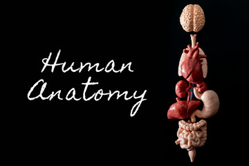 Human anatomy, organ transplant and medical science concept with a collage of human organs in anatomically correct position like brain, heart, lungs, stomach and liver isolated on black background