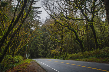 Road and Mossy Trees in the Fog