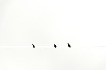 three bird on cable