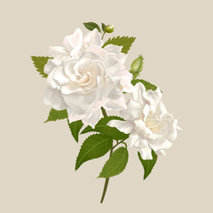 White gardenia flowers illustration