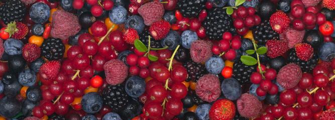 berries bannaer background