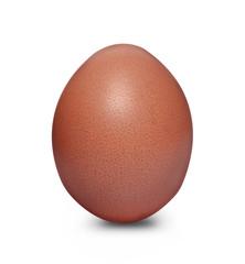 Chicken egg closeup