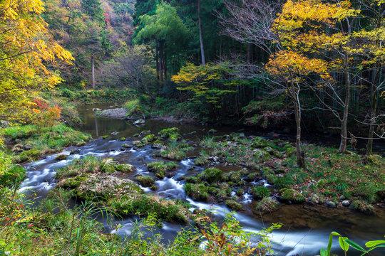 紅葉の渓流 石川県小松市荒俣峡