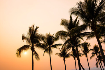Sunset at tropical island, orange sky and silhouettes of palm and coconut trees