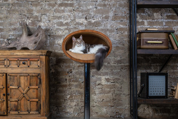 Nice cat in interior