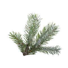 branch of fir with snow isolated on white background