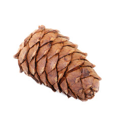 cedar cone isolated on white background