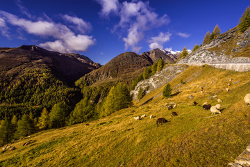 Grossglockner High Alpine Road, Hohe Tauern National Park, Salzb