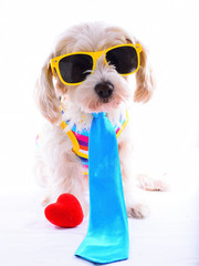 party dog with heart