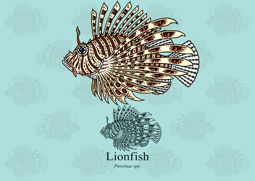 Lionfish. Vector illustration with refined details and optimized stroke that allows the image to be used in small sizes (in packaging design, decoration, educational graphics, etc.),