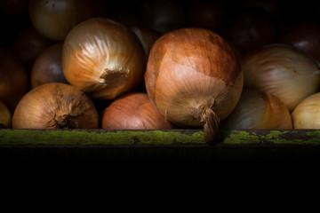 Big fresh gold onion