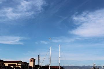pelican flying in blue sky