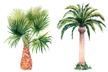 Set of pictures of hand drawn watercolor palm trees. picturesque image of a palm tree. palm tree on the beach Wall mural