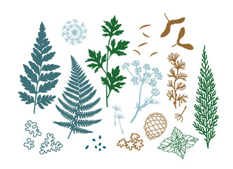 Botanical illustration plants, leaves, cones,moss, flowers and seeds. Set of  vector floral decor elements. Eps10 forest illustration. For textile and other design projects.