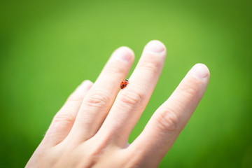 Ladybird on hand