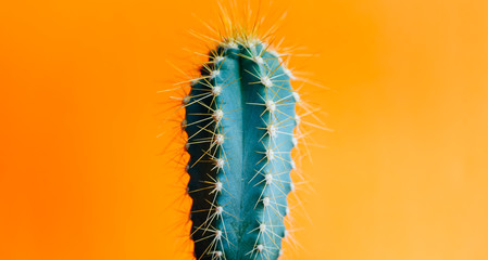 Foto op Aluminium Cactus Green cactus closeup over bright orange pastel background. Colorful yellow summer trendy creative concept.