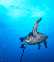 Turtle and underwater camera.