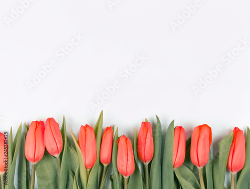 Red tulips on white background. Woman day and Mother Day background