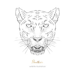 Symmetrical Vector portrait illustration of roaring black panther. Hand drawn ink realistic sketching isolated on white. Perfect for logo branding t-shirt coloring book design.