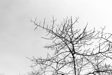 Silhouette of Tree branches in monochrome style