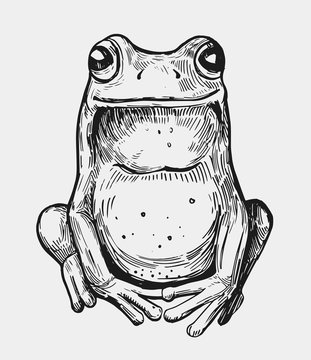 Sketch of frog. Hand drawn illustration. Vector. Isolated